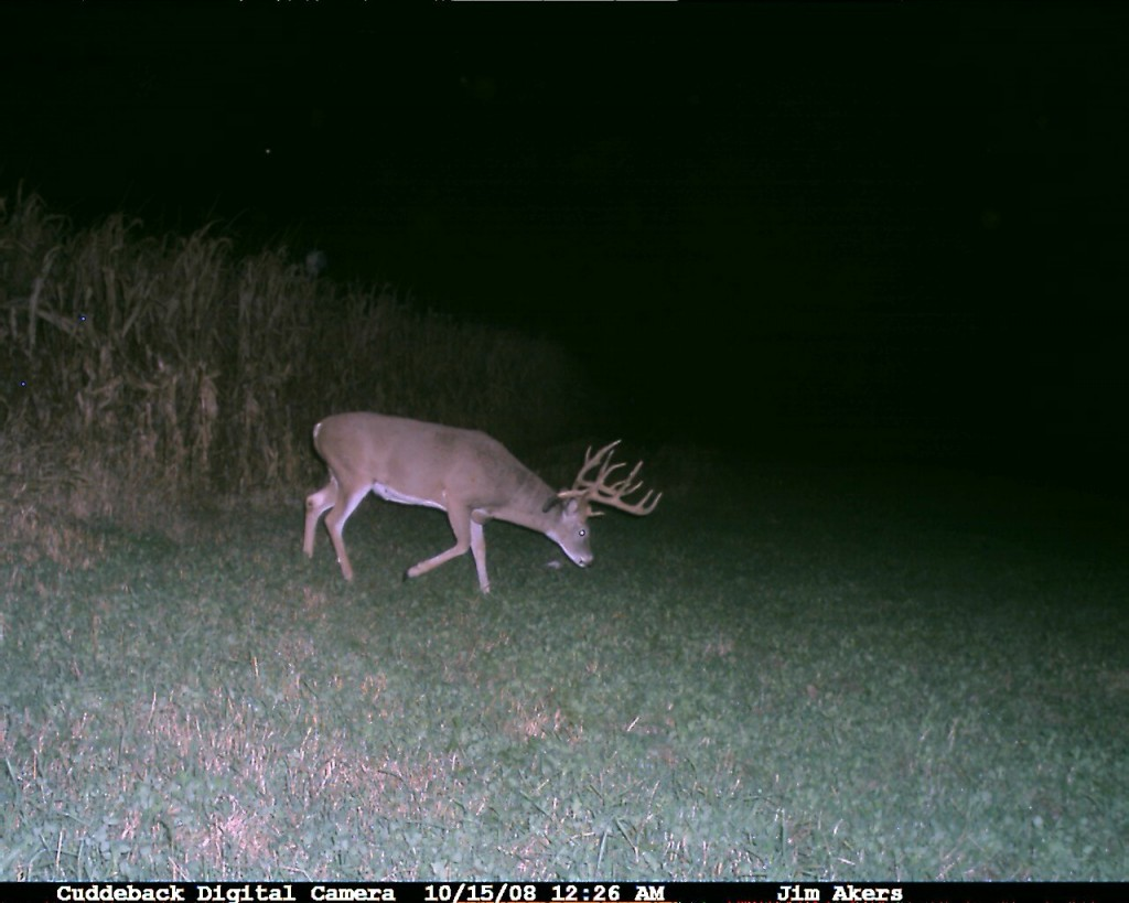 Monster Whitetail Deer picture from a cuddeback trail camera