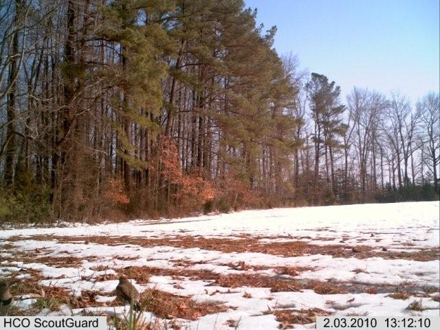 flicker on trailcam